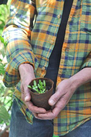 turba: hombre que sostiene una maceta de turba para las plántulas