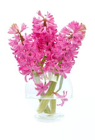 hyacinths: hyacinths in glass vase isolated on white background Stock Photo