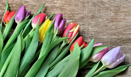 tulipan: kolorowe tulipany na tle drewniane Zdjęcie Seryjne