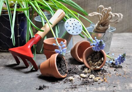 overturned: overturned little pots with seeds and garden accessories  on plank Stock Photo
