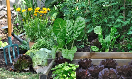 greenery: greenery vegetable garden with a spade Stock Photo