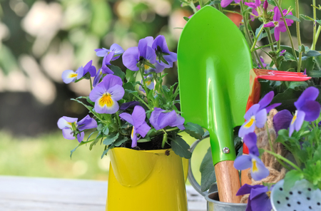 assignments: colorful gardening tools among purple flowers on a garden table