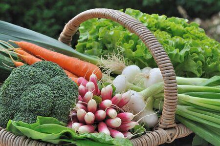 frescura: verduras frescura en una cesta en el jardín