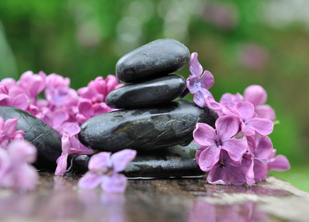 black pebbles: black pebbles among petals of lilac on green background