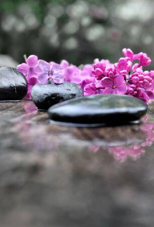black pebbles: black pebbles among petals of lilac on bokeh background Stock Photo
