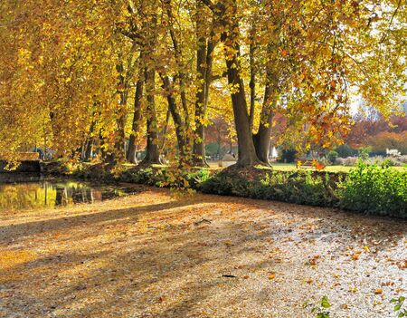 waters edge: beautiful trees with autumnal foliage at the waters edge in a park Stock Photo