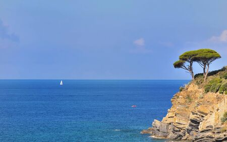 edge of cliff: maritime pine at the edge of a cliff on blue sea background