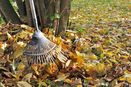dode bladeren: hark in gouden dode bladeren in de tuin