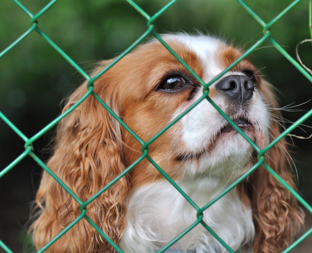 wistful: cute dog behind a fence with a wistful looking