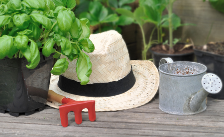 basil in pot, straw hat and little gardening accessories on wooden plank