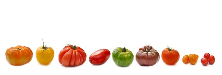 aligned: collection of tomatoes aligned and isolated on white background