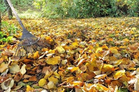 hark op een stapel van gouden bladeren in een tuin