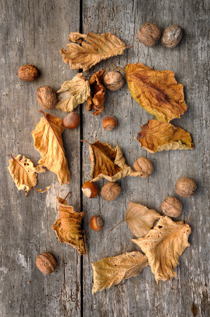 dode bladeren: dead leaves,hazelnuts and walnuts on an old plank