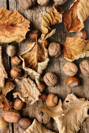 dead leaves: dead leaves,hazelnuts and walnuts on an old plank