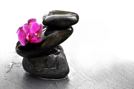 black pebbles: orchid on black pebbles piles with water drops