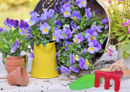 flowers and gardening tools on a table