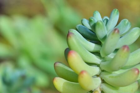 close on fleshy leaf of succulent plant in garden