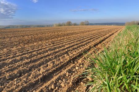 rows in plowed field under blue sky
