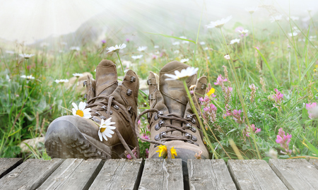 hiking shoes on plank in flowering meadow in mountain