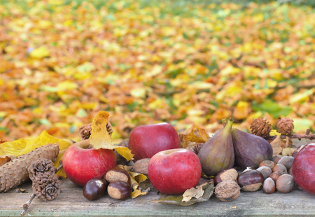 autumnal: red apples with autumnal fruits in front of yellow leaves