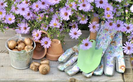 정원 장비로 원 예 테이블에 꽃 전구 스톡 콘텐츠
