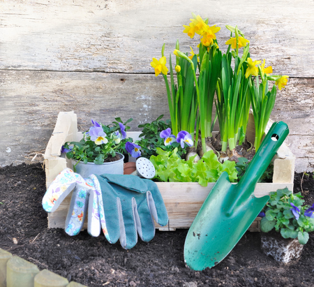 gloves and shovel with flowers and lettuce in a box for plantation