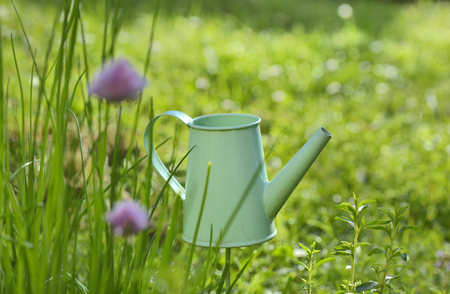 little decorative watering can in chive booming in a garden
