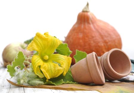 yellow flowers, terra cotta pots  and pumpkin on garden table 写真素材
