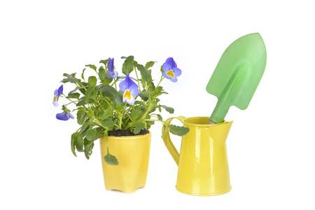 flowers potted in a little yellow pot and shovel in a can isolated on white background Stockfoto