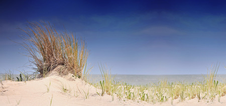 beautiful panoramic view on the seaside from dune with grass Standard-Bild - 118228839