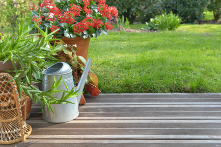 succulent plant potted blossoming on wooden terrace in garden