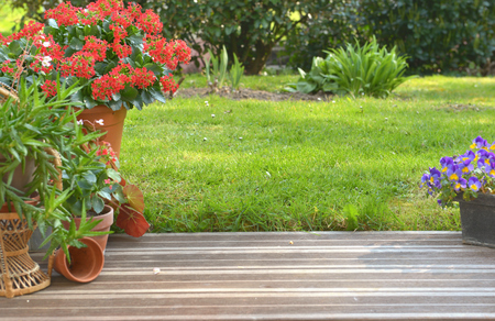 succulent plant potted blossoming in a garden on a wooden terrace Stockfoto