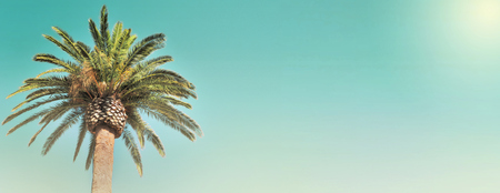 panoramic view on leaf of a palm tree in the sky