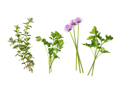 thyme, parsley and shives isolated on white background 版權商用圖片