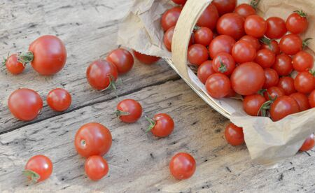 fresh cherry tomatoes spilled from a little basket on a wooden rustic background