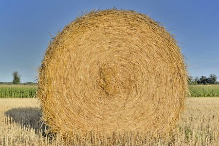 close on a  haybale in a field shooting from the  front under blue sky