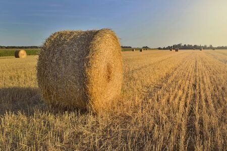 scenic rural landscape with a haybale in a field at sunset Фото со стока