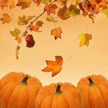 decorative pumpkins and leaves on orange background for halloween celebration
