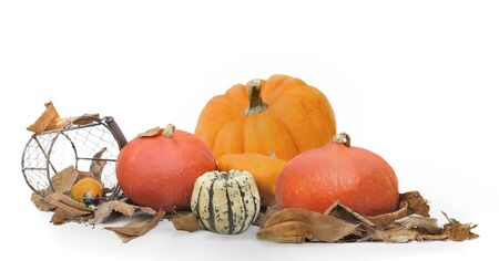 pumpkins and other squashes in leaves on white background