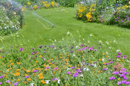 colorful flowers blooming in flowerbed with greenery grass in a garden watering in summer