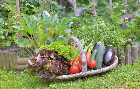 basket full of freshness vegetables put on the grass in front of a vegetable garden