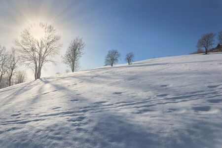 sunrise trought the tree doing shadows on the snow  covered a hill