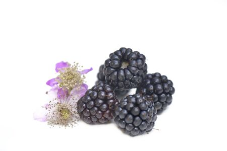 goup of freshness blackberries with flower isolated on white background