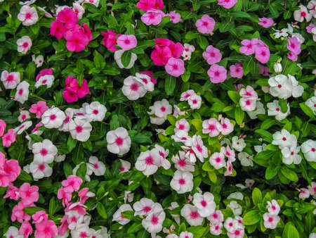Colorful flowers blooming in a garden with variety of vibrant colors a