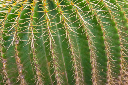 A selective focus macro image of a green cactus with thorns in a pattern