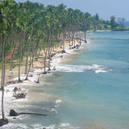 Coconut trees in a row along the sandy beach with waves crashing on the shore at port blair Archivio Fotografico