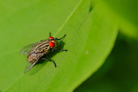 Selective focus Macro image of a housefly siting on green leaf 写真素材