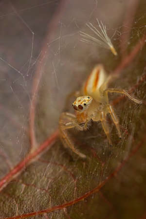 Selective focus Macro image image of a spider siting on a brown leaf