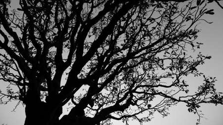 An Abstract Black and white silhouette of a tree with branches and leaves against sky in the background