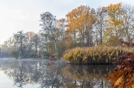 drove: Trees and drove decorate the water line of a pond with autumn colors on a misty morning in the arboretum De Braak in Amstelveen, The Netherlands